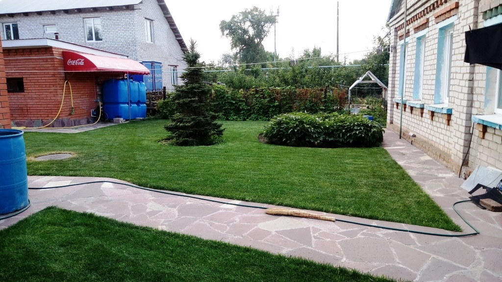 Где выращивают рулонный газон в самарской области